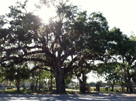 Live Oak Bonita Cemetery